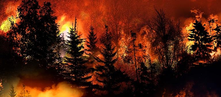 Bobcat Wildfire California
